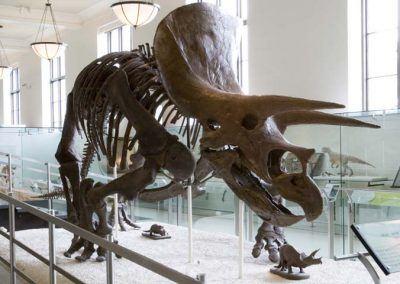 dino muse histoire naturelle