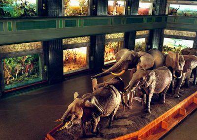 mammifere muse histoire naturelle ny
