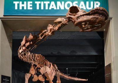 tyrannosaure muse histoire naturelle
